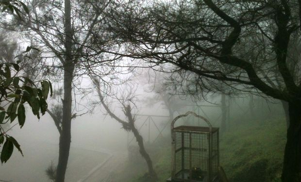A picture of a misty Talacauvery shrine in Kodagu