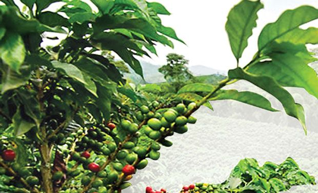 Coffee consumption has been increasing by 2.8 per cent since the last five years, as against 2.4 per cent in the previous five-year period