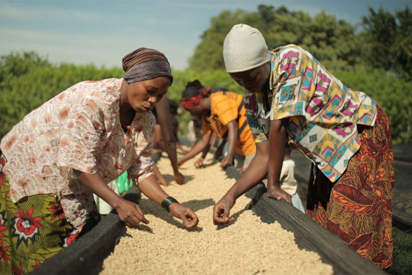 Nyamasheke seeks to create more jobs along the coffee value chain.