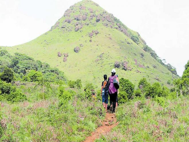Women will be drawn from local villages and tribal hamlets as they know the terrain better. The women are being identified and shortlisted by local forest officials and panchayat members. dh file photo