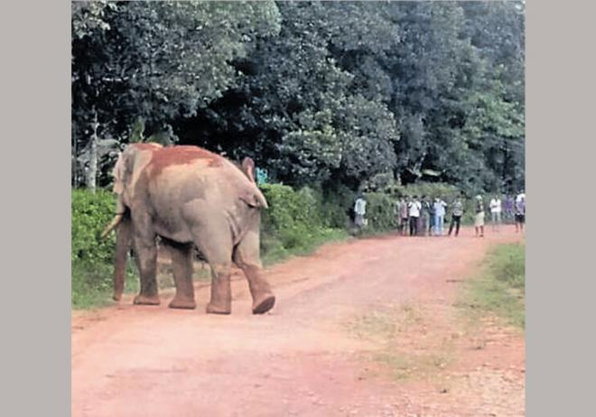 In 2017-18, three human and 11 elephant deaths have been reported till July 10. DH file photo.